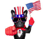 American dog — Stock Photo