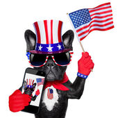 American selfie dog — Stock Photo