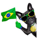 Brasilien fotboll hund — Stockfoto