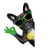 Brazil soccer dog — Stock Photo
