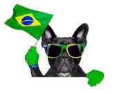 Brazil soccer dog   — Stock Photo