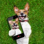 Very funny dog — Stock Photo #48115057