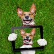 Very funny dog — Stock Photo