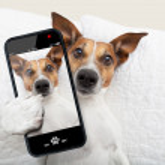Sleepyhead selfie dog — Stock Photo #48115093