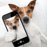 Sleepyhead selfie dog — Stock Photo #48115181