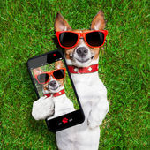 Funny selfie dog — Stock Photo