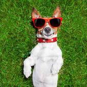 Very funny dog — Stock Photo
