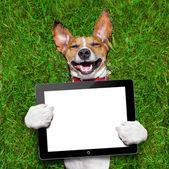 собака холдинг таблетка — Стоковое фото