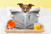 Dog reading newspaper  — Stock Photo