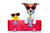 Cane in vacanza — Foto Stock