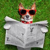 Hund läsa tidningen — Stockfoto