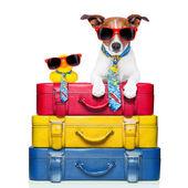 Hund på semester — Stockfoto