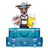 Bavarian dog — Foto Stock