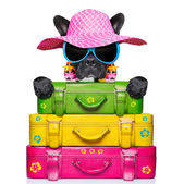 Holliday luggage dog — Stock Photo