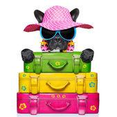 Holliday luggage dog — Stock Photo