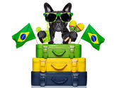 Brazilian dog — Foto Stock