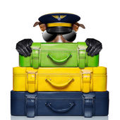 Luggage captain dog — Foto Stock