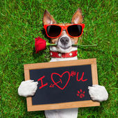 Valentines dog — Foto Stock