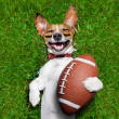 American football dog — Stock Photo