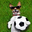 Funny german soccer dog — Stock Photo