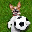 Funny soccer dog — Stock Photo