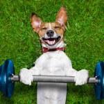 Fitness dog — Stock Photo #48715617