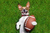 Amerikansk fotboll hund — Stockfoto