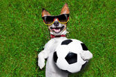 Funny  german soccer dog — Foto Stock