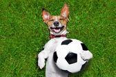 Cane divertente calcio — Foto Stock