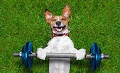 Cane di fitness — Foto Stock