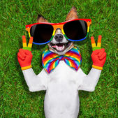Very funny gay  dog — Stock Photo