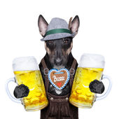 Bavarian beer dog  — Stock Photo