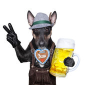 Bavarian dog  — Stock Photo