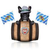 Bavarian dog  — 图库照片