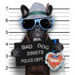 Mugshot dog — Stock Photo #49902681