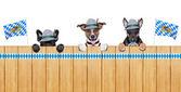 Bavarian dogs — Stock Photo