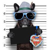 Mugshot dog — Stock Photo