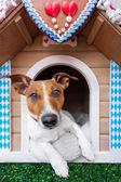 Bavarian dog house — Stock Photo