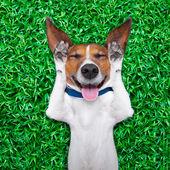 Hund drömmer — Stockfoto