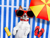 Dog summer beach — Stockfoto