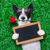 Valentines dog  — Stock Photo