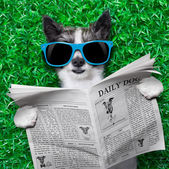 Dog newspaper — Stock Photo
