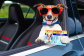 Dog drivers license  — Stock Photo
