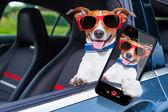 Dog window car — Stock Photo