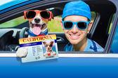 Dog car window  — Stock Photo
