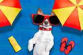 Dog summer beach — Stock Photo