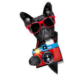 Dog photographer — Stock Photo