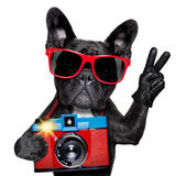 Fotógrafo de cão — Fotografia Stock