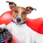 Dog tv — Stock Photo