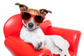 Dog couch or sofa — Stock Photo